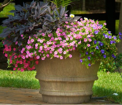 Planter with Annuals 1.jpg